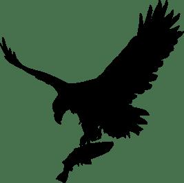 eagle-3685419_1280